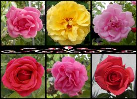 Rose Collage by Leichenengel