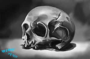 Skull study by KarachiIdiot