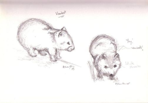 Wombat studies by hippydeath