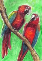 Parrots by shortass205