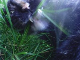 Eating Grass by JasminaSusak