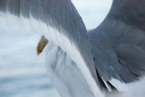 Seagull by Tinnef
