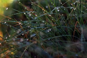 Dew Drops by Kimberly-M