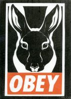 Obey by thaily