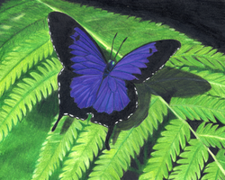 Purple Ulysses Butterfly by towelgirl21