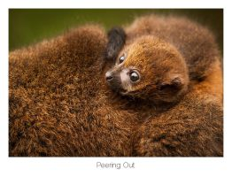 Peering Out by AlexMarshall