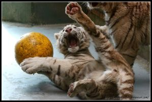 Kung Fu Tiger by AF--Photography