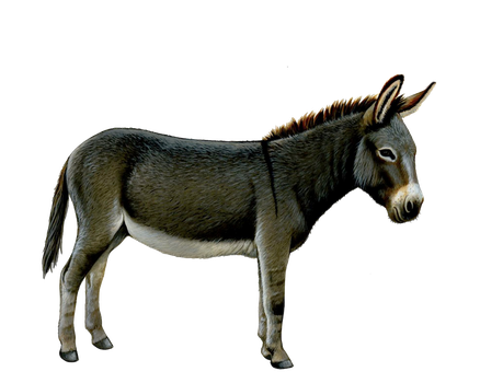 Png Donkey by Moonglowlilly