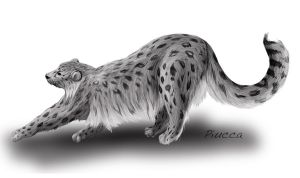 Snow Leopard Commission by Piucca