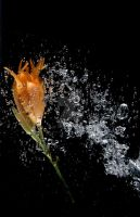Orange Flower Underwater by sarahashleyphotos