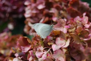 white butterfly by Lydiie