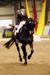 Elegant Mover by silhouette-equus