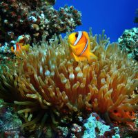 A proper colours of Red sea by Vitaly-Sokol
