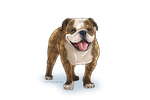 Cartoonize your pet: Billy by Toki-Designs