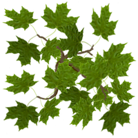Texture - Vue Maple Leaf by markopolio-stock