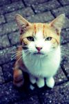 'CatsEyes. by pirates-ar-cool
