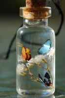 Subdued butterflies in bottle by jen4eternity