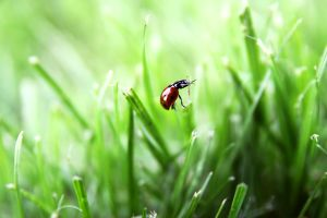 In the grass by Gotiika