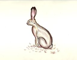 Observation of a Hare by Jecksy