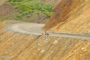 Grizzly cub road worker by matthieu-parmentier