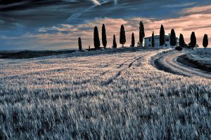 Val d'Orcia  18 by CitizenFresh