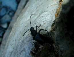 Close Up Beetle by TalesOfNightWing