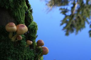 Soothing fungus wp by ejkej0046