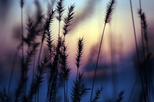 Grasses in a Softer Light 4 by UnderTheWildMoon