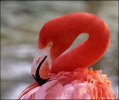 Flamingo Portrait Studio 4 by SilkenWinds