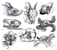 animal anatomy studies so far by gonedreamer