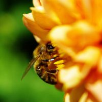 working bee 2 by Kaja-kgr