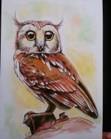 Watercolour owl by EmiliaPaw5