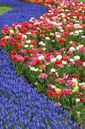Tulip Garden 7681114 by StockProject1