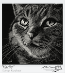 Scratchboard painting Cat by Pinselpfote