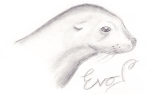 Seal by xMissLovelessx