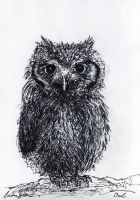 Owl by SandraHultsved