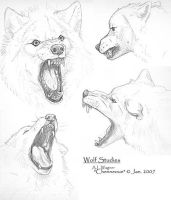 Wolf Head studies 1-07 by chenneoue