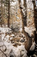 Galena Creek in the Snow by sintar