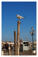 Venice - The Seagull II by InsanaFobia