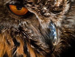 Eagle Owl - Jun 12 by mszafran