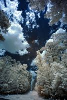 Lake Crabtree IR XII by LDFranklin