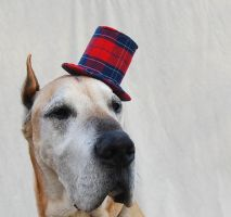 Tiny Top Hat for Dogs: Red Plaid Gentleman by TinyTopHats