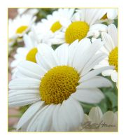 white and yellow by diesnail