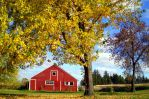 Bright Red Barn by BritLawrence