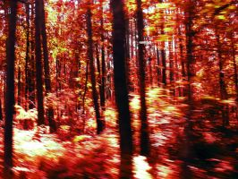living forest 1 by grajcar