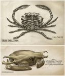 Crab Skeletons by ChristianPearce
