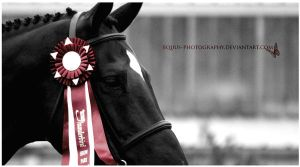 Faith In You by Equus-Photography