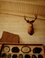 Rocks and Taxidermy IV by DianaExperiment