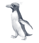 Day 6-Macaroni Penguin (Eudyptes chrysolophus) by Cloudwilk