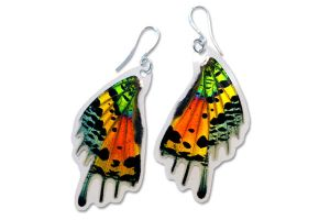 Real Sunset Moth Wings Earrings by TheButterflyBabe